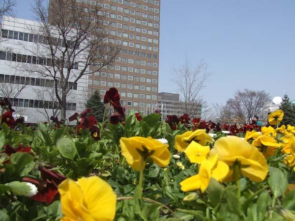 HAM\'s Spring Photo Album 02