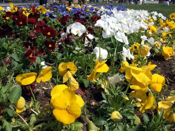 HAM\'s Spring Photo Album 08