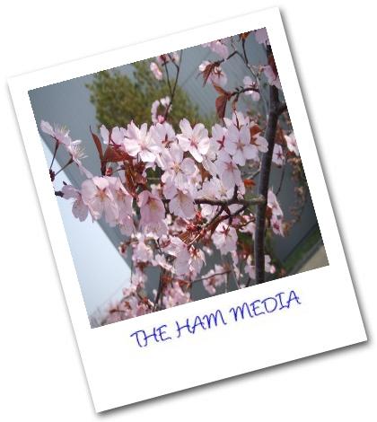 THE HAM MEDIA ALBUM